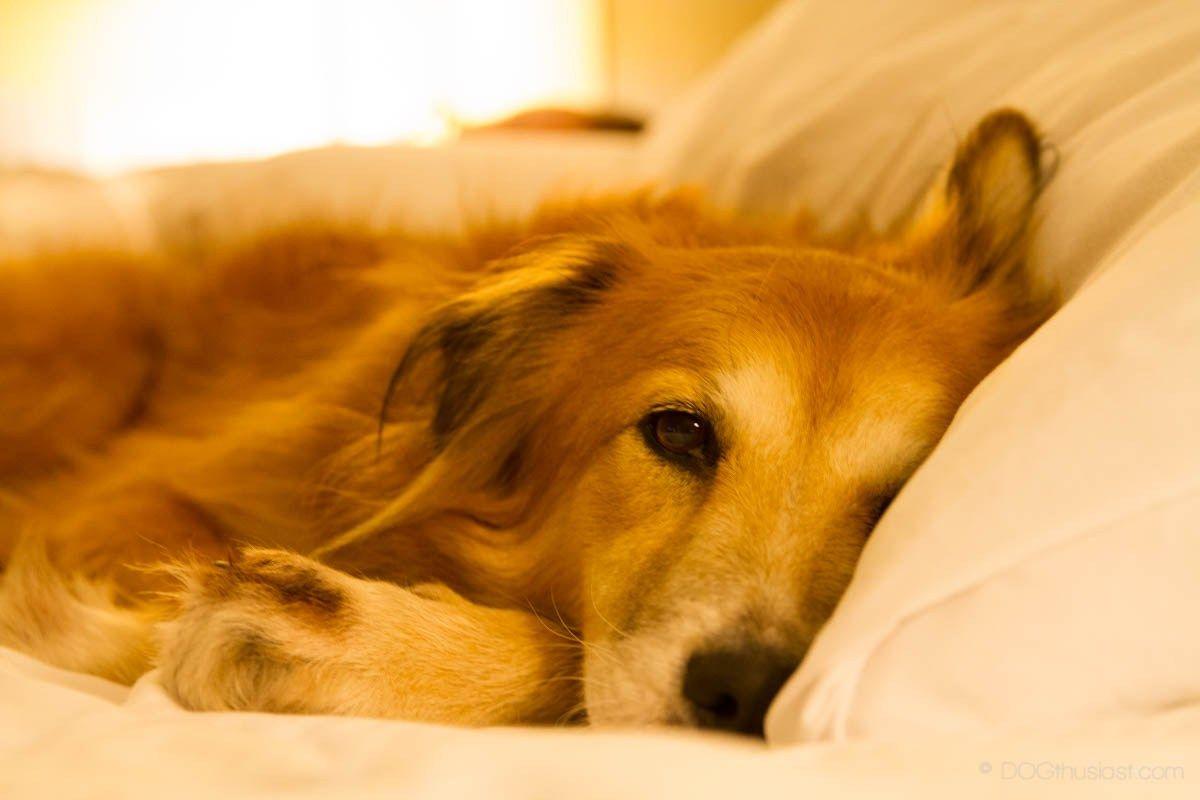 Pin on How to Treat Dog Diarrhea