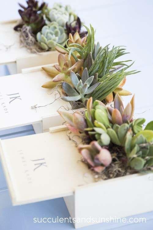 Succulent Centerpieces For A Corporate Event