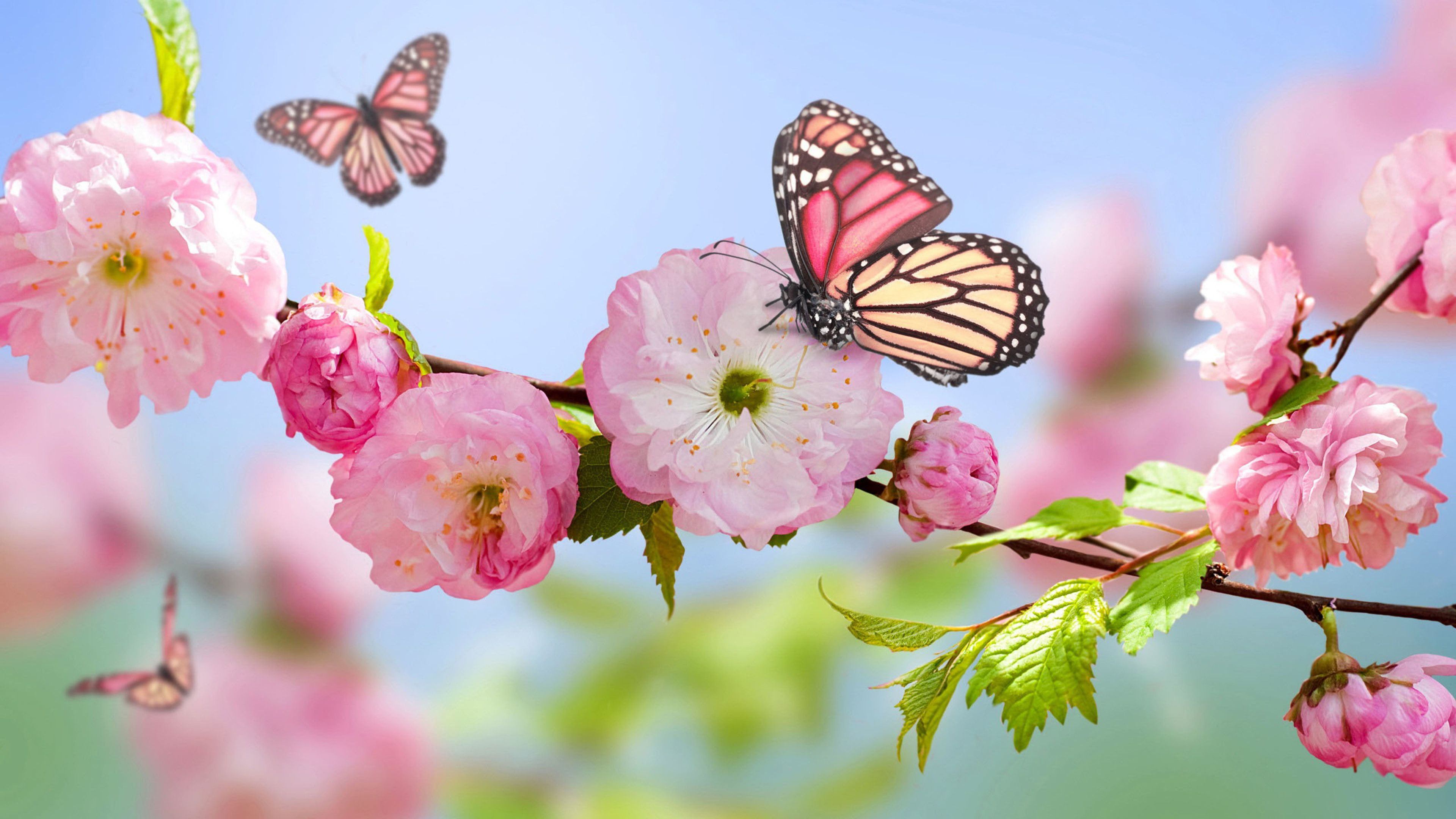 Wallpaper Download 3840x2160 Pink Butterfly On The Blossom Trees Wonderful Macro Wallpapers Download Spring Wallpaper Butterfly Wallpaper Flower Wallpaper