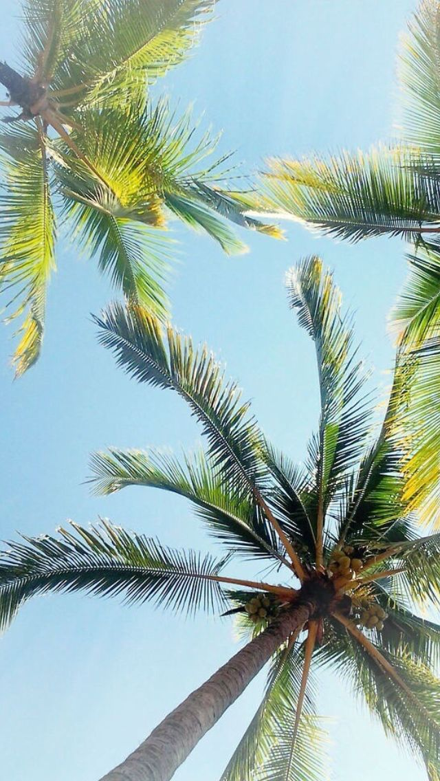 Palm trees summer iphone wallpaper Wallpaper Pinterest