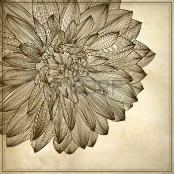 planche botanique: dessin de fleur de dahlia sur fond grunge