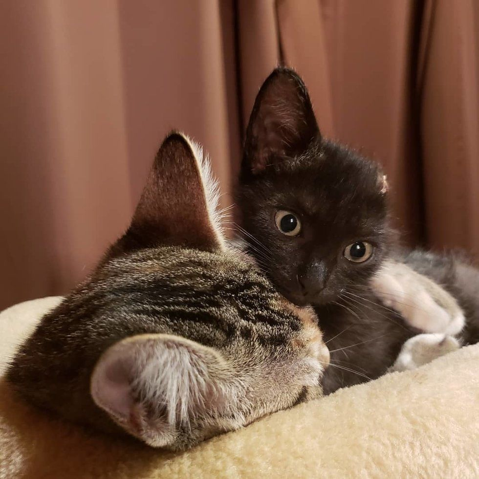 Woman Saves Kitten From Car Engine And Brings Him Back From The Brink The Kitty Can T Stop Cuddling Love Meow Kitten Cuddling Little Kittens