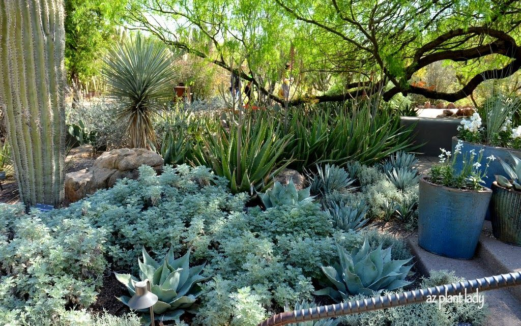 RAMBLINGS FROM A DESERT GARDEN.... Made in the Shade