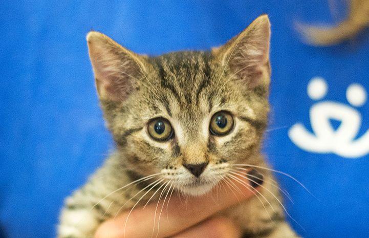 My Story New York Volunteer Arlene Dolinko Best Friends Animal Shelter Pet Adoption Animals Beautiful