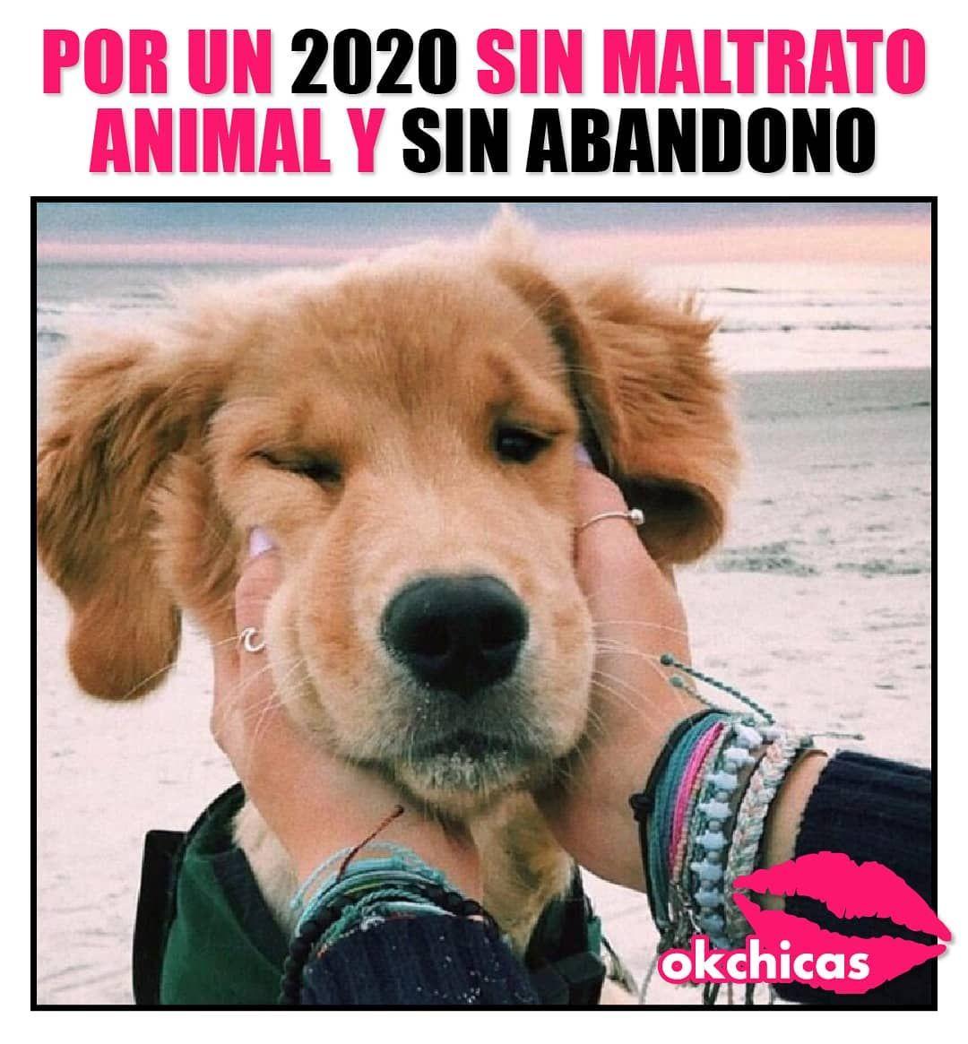 9 954 Me Gusta 22 Comentarios Okchicas Okchicas En Instagram Un 2020 Feliz Para Ellos Memes Divertidos Animales Hermosos Animales Y Mascotas