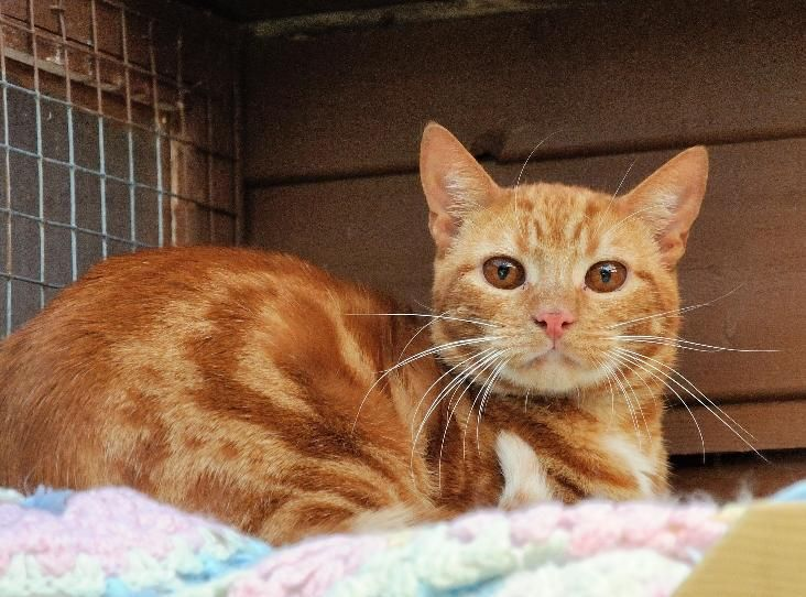 Smartie is one of several cats signed over to the RSPCA on