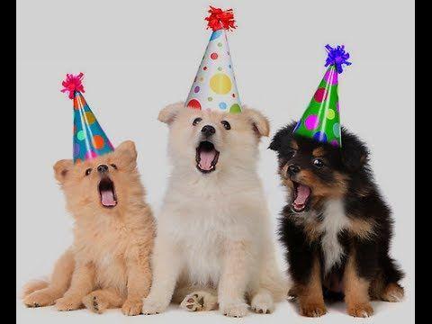 Happy Birthday Funny Dogs Song Happy Birthday Happy Birthday Dog Happy Birthday Funny Happy Birthday Video