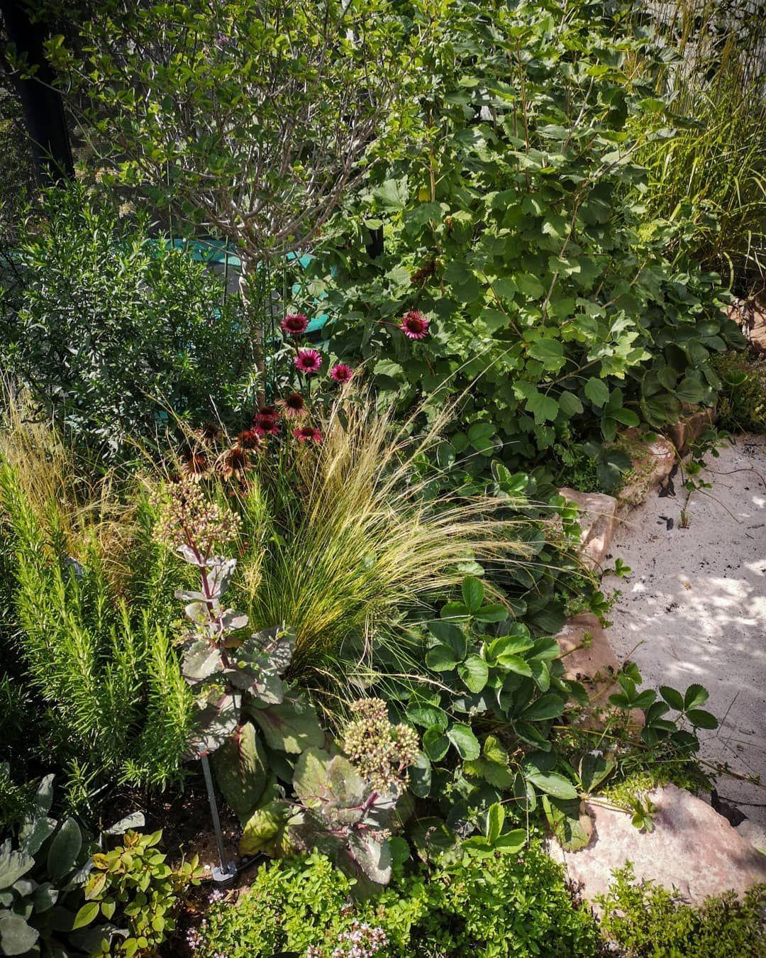 Wenn Man Einen Kleinen Garten Hat Und Total Vernarrt In Pflanzen Ist Muss Man Jedes Fleckchen Erde Nutzen Der Kleine Streifen Z Pflanzen Garten Kleine Garten