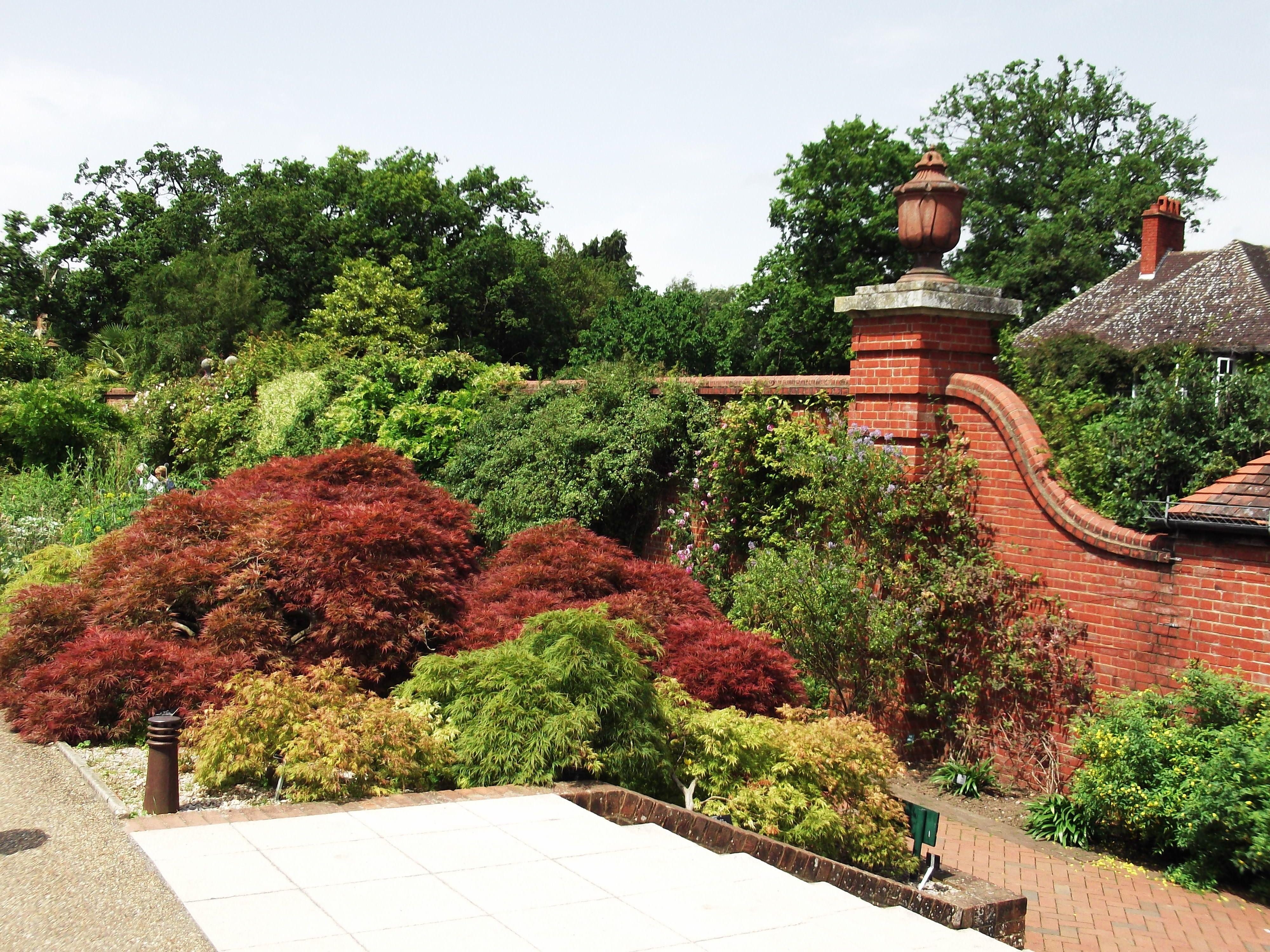 Wall and shrubs at RHS Garden Wisley | Shrubs, Garden, Blossom