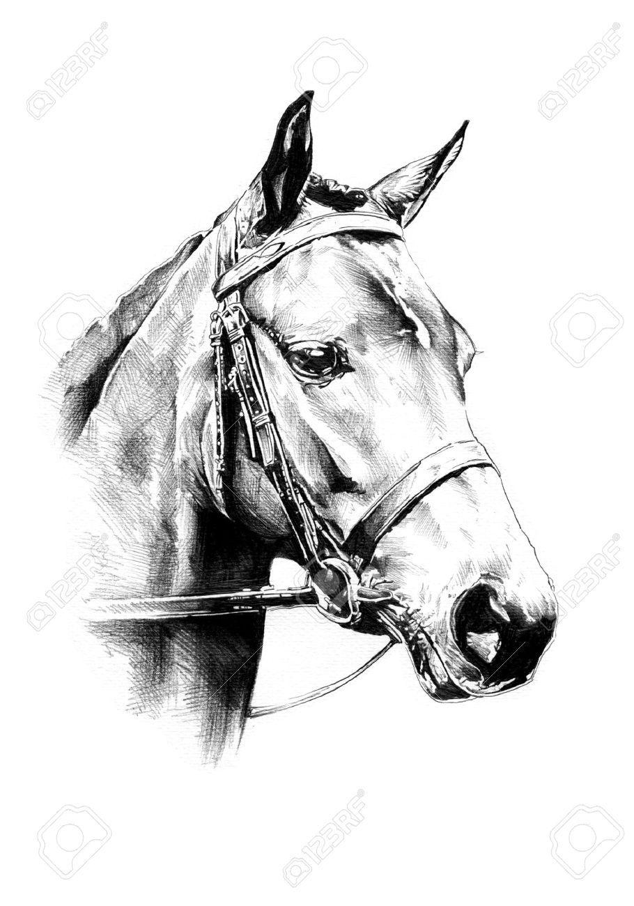 Stock photo nel 2019 per simona disegni a matita for Immagini di cavalli da disegnare