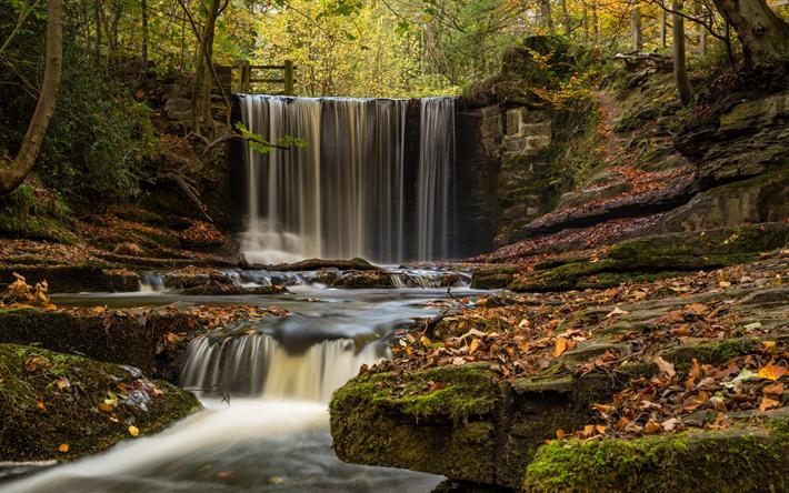 Lataa kuva syksy, vesiputous, river, syksyisessä metsässä, pudonnut keltaisia lehtiä, Wrexham, Plas Teho Metsään, Wales