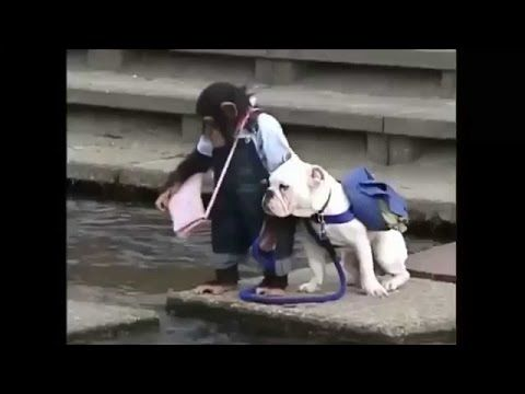 Monkey with his pet dog crossing the river- Hilari