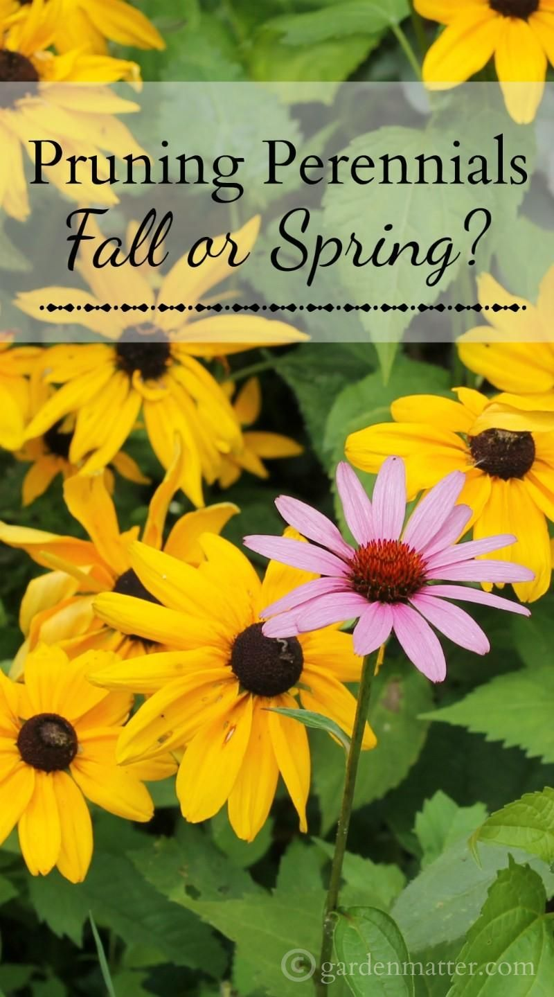 Pruning Perennials Why You Should Wait Until The Spring Perennials Backyard Flowers Garden Garden Vines