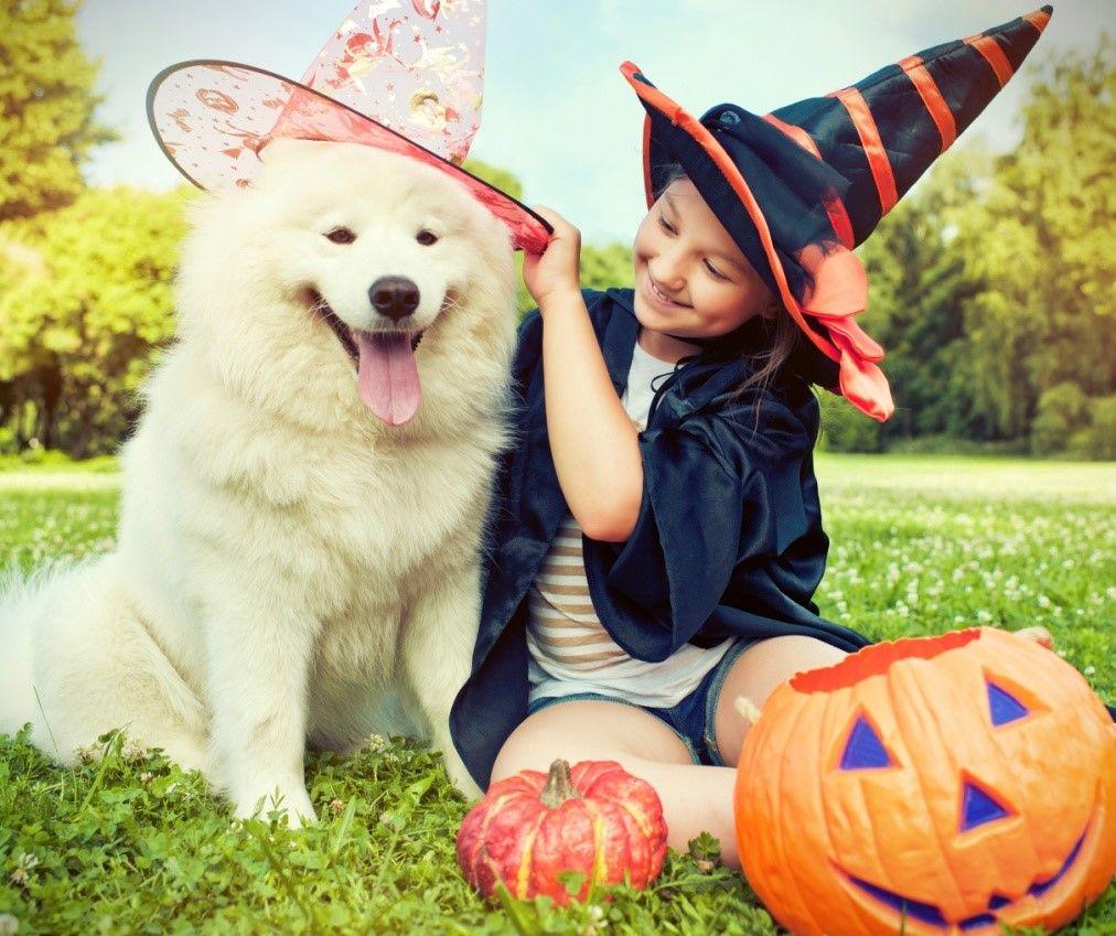 Halloween savings 9 diy pet costumes for your pooch pet