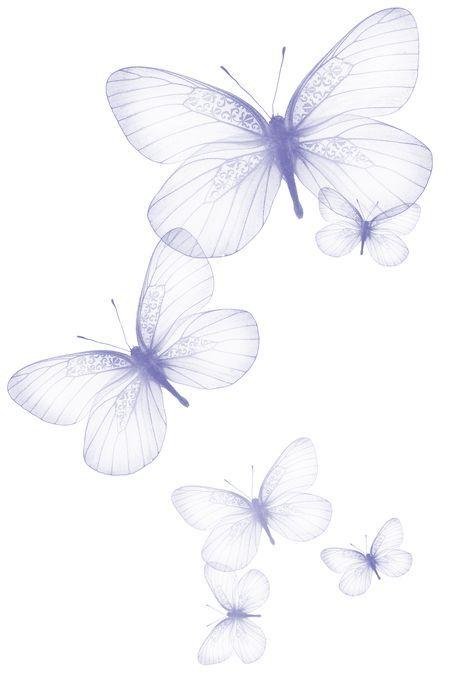 Transparent Butterfly Png Clipart Picture Kelebekler Resim Cizimler