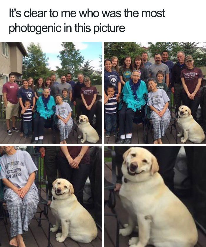 10+ Of The Happiest Animal Memes To Start The Week With A Smile