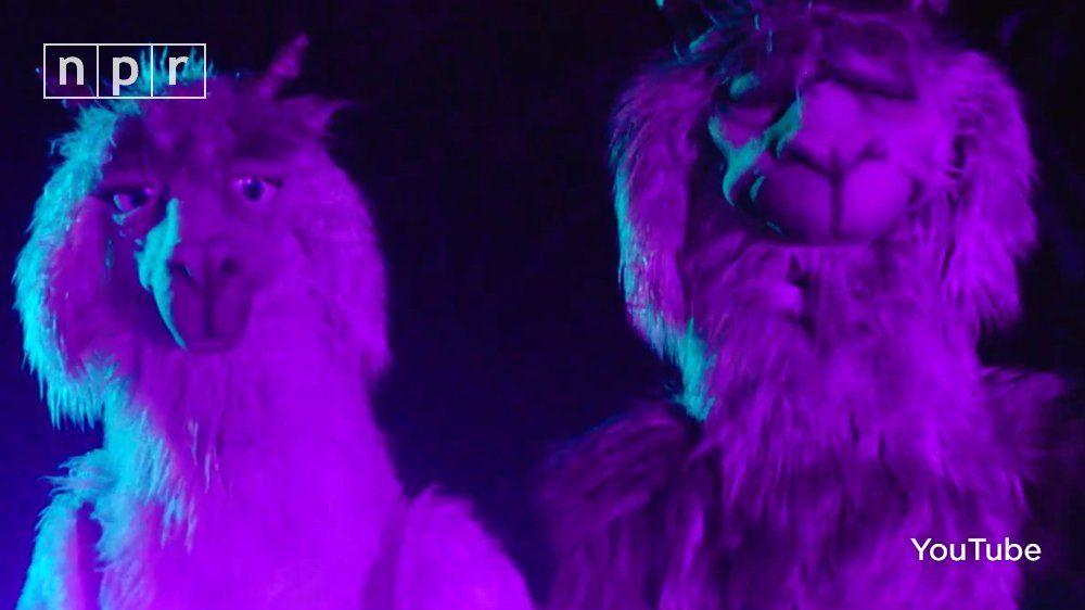 Fall Out Boy Mania Wallpaper Iphone Llamas No Purple Llamas Even Better Fob Story