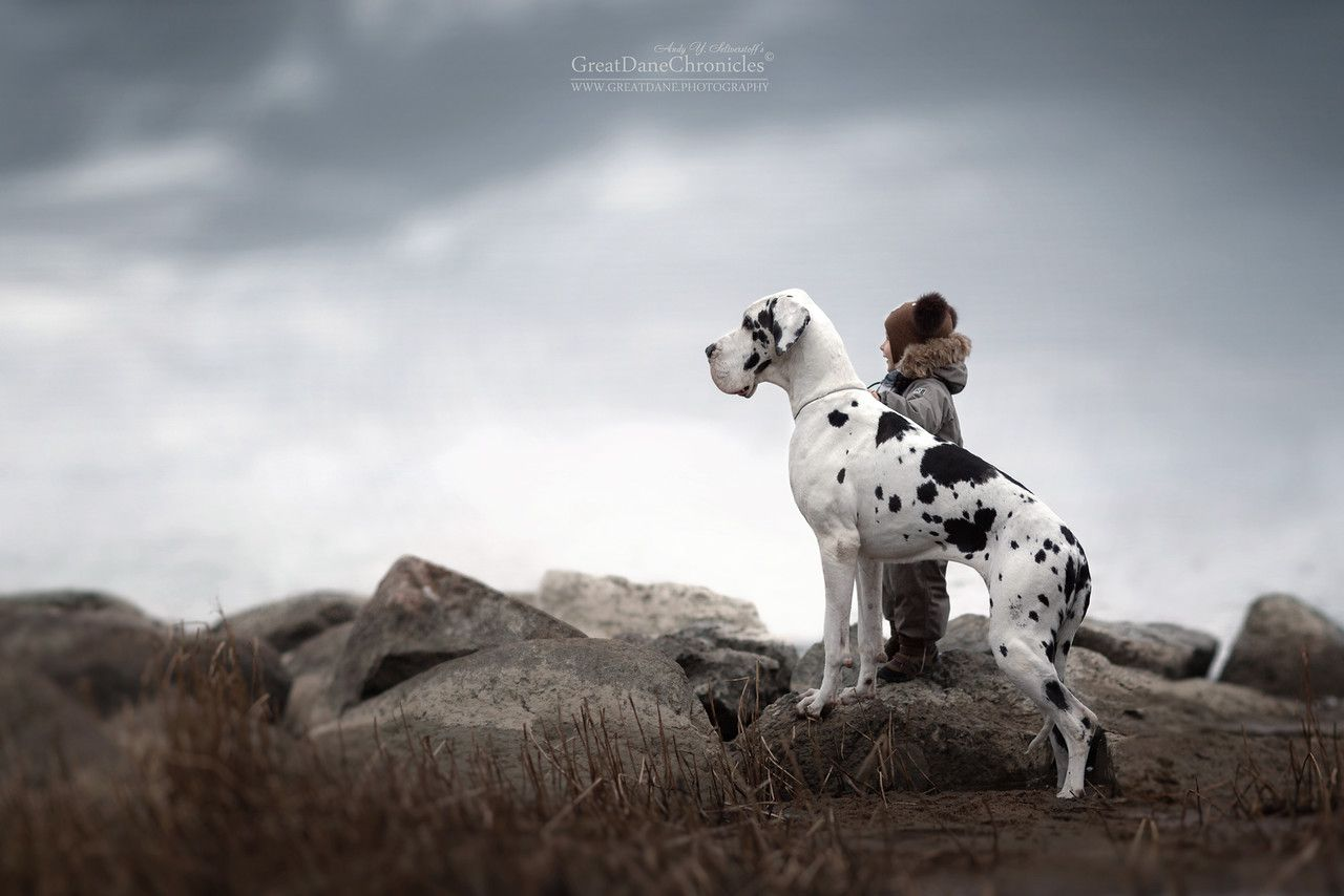 Adorable Pictures Of Kids With Big Dogs Adorable Pictures Dog - Tiny children and their huge dogs photographed in adorable portraits by andy seliverstoff