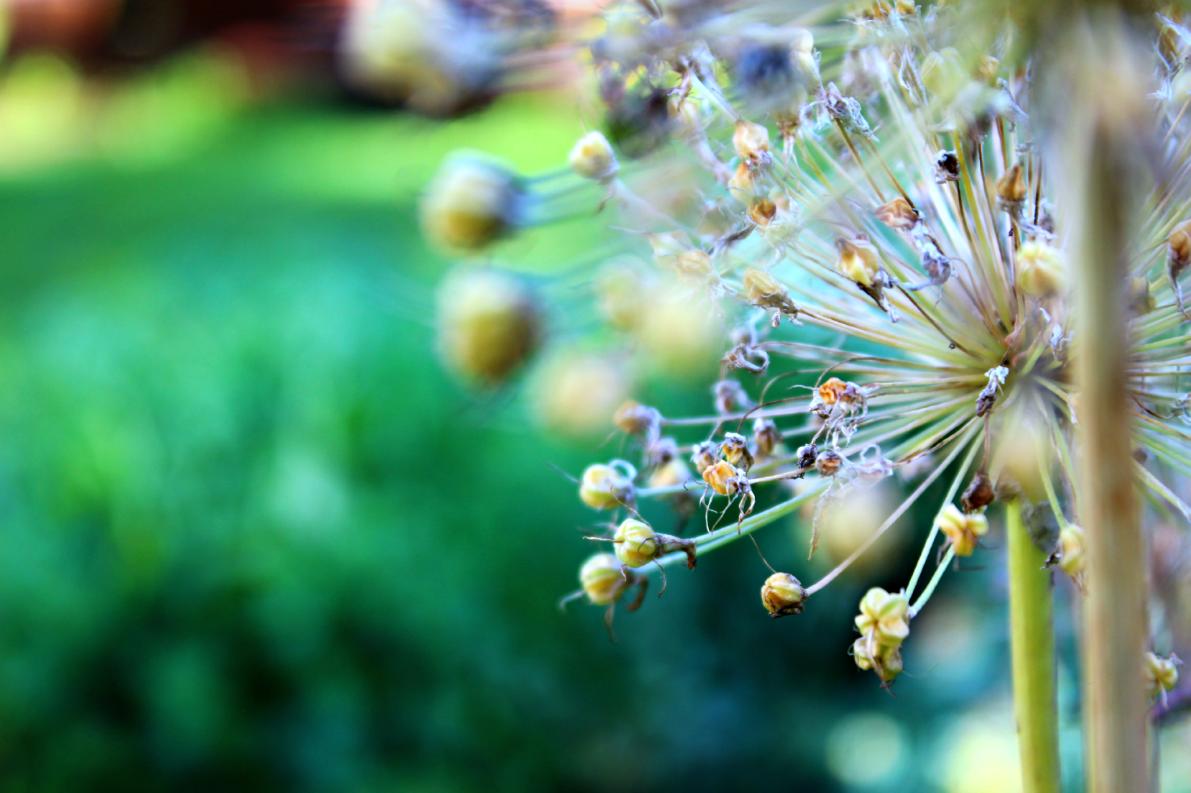 En tarkalleen tiiä mikä kukka tämä on mutta mummon kukkapenkistä napsastu kuva !
