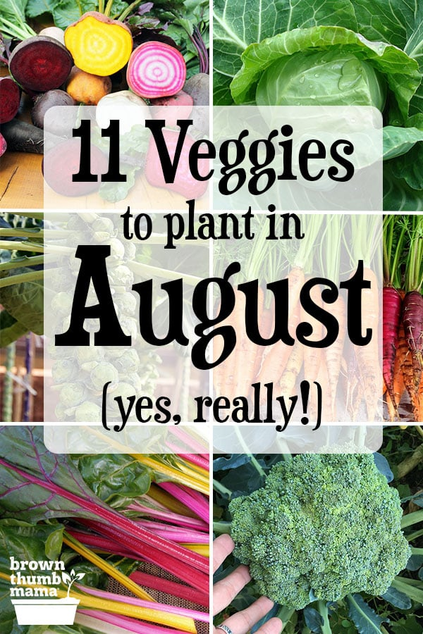 There are lots of vegetables you can plant in August! Even though it's hot outside, these twelve vegetables can handle the heat and will give you a tasty harvest this fall and winter. Includes recommended varieties, planting tips, and recipes. #Gardening #OrganicGardening #FallGarden #ForBeginners