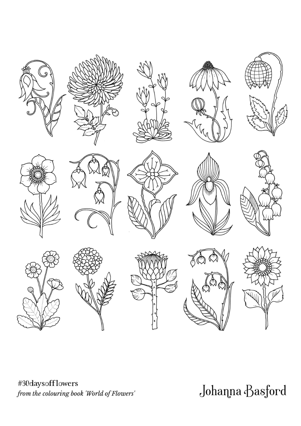 johanna basford flowers to colour in - Google Search