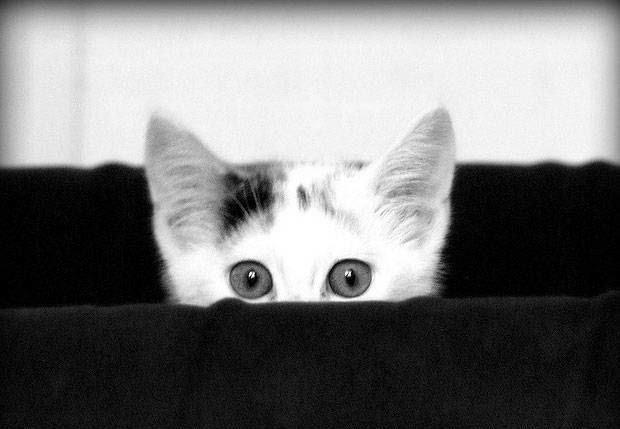 Baby Kitten Playing Peekaboo Framed Print Picture Poster Animal Kitty Cat Art