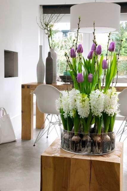 Zdjecie Nr 7 W Galerii Hiacynty Tulipany I Szafirki W Domu Kwiaty Cebulowe Tulips Arrangement Spring Home Decor Indoor Water Garden
