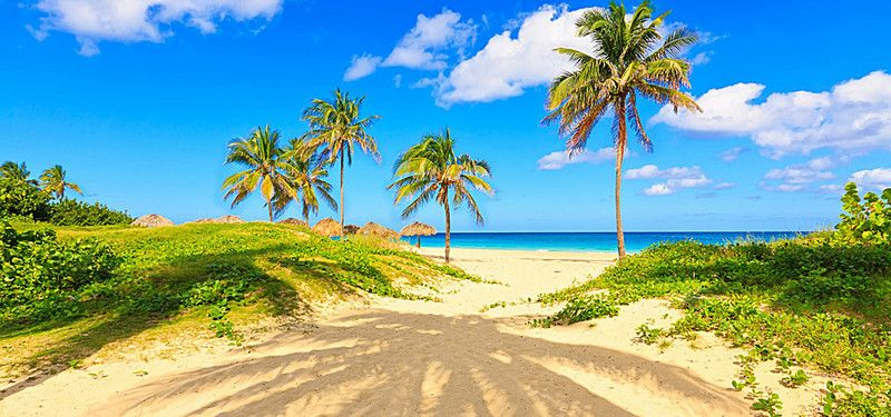 Seaside Palm Beach Background Beach Background Images Beach Background Palm Beach Style