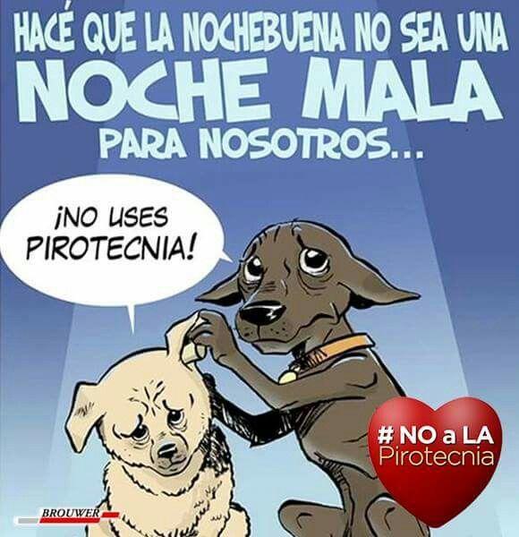 No A La Pirotecnia Mascotas Frases Videos De Animales Tiernos Animales Gif