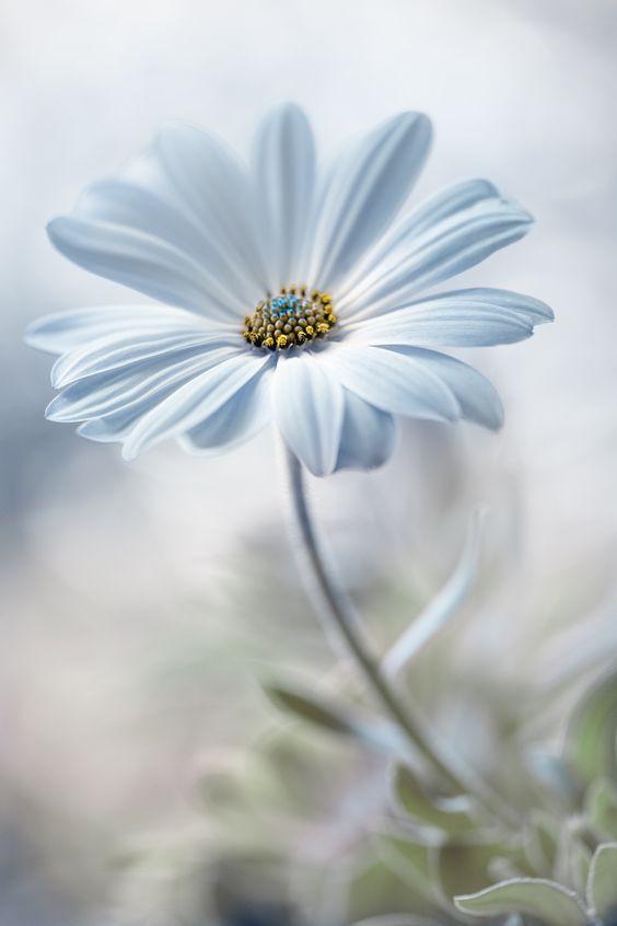 Der hellste Blauton des Winter - Farbtyps verzaubert durch seine Frische! helles Eisblau (Farbpassnummer 16) Kerstin Tomancok / Farb-, Typ-, Stil & Imageberatung #flowershintergrundbilder