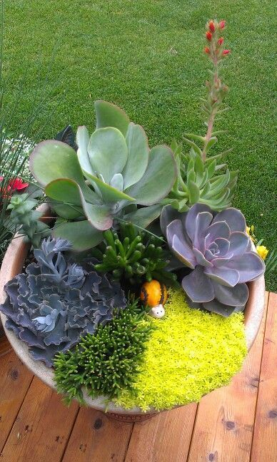 blue succulents! The mixture of fine and large-leaved succulents have wonderful d blue succulents! The mixture of fine and large-leaved succulents have wonderful texture.