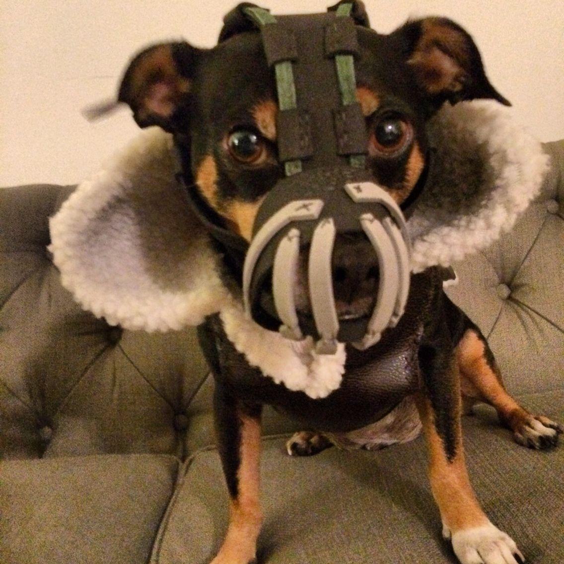 Bane Dog Halloween Costume Dog Muzzle Dog Costume Dogs