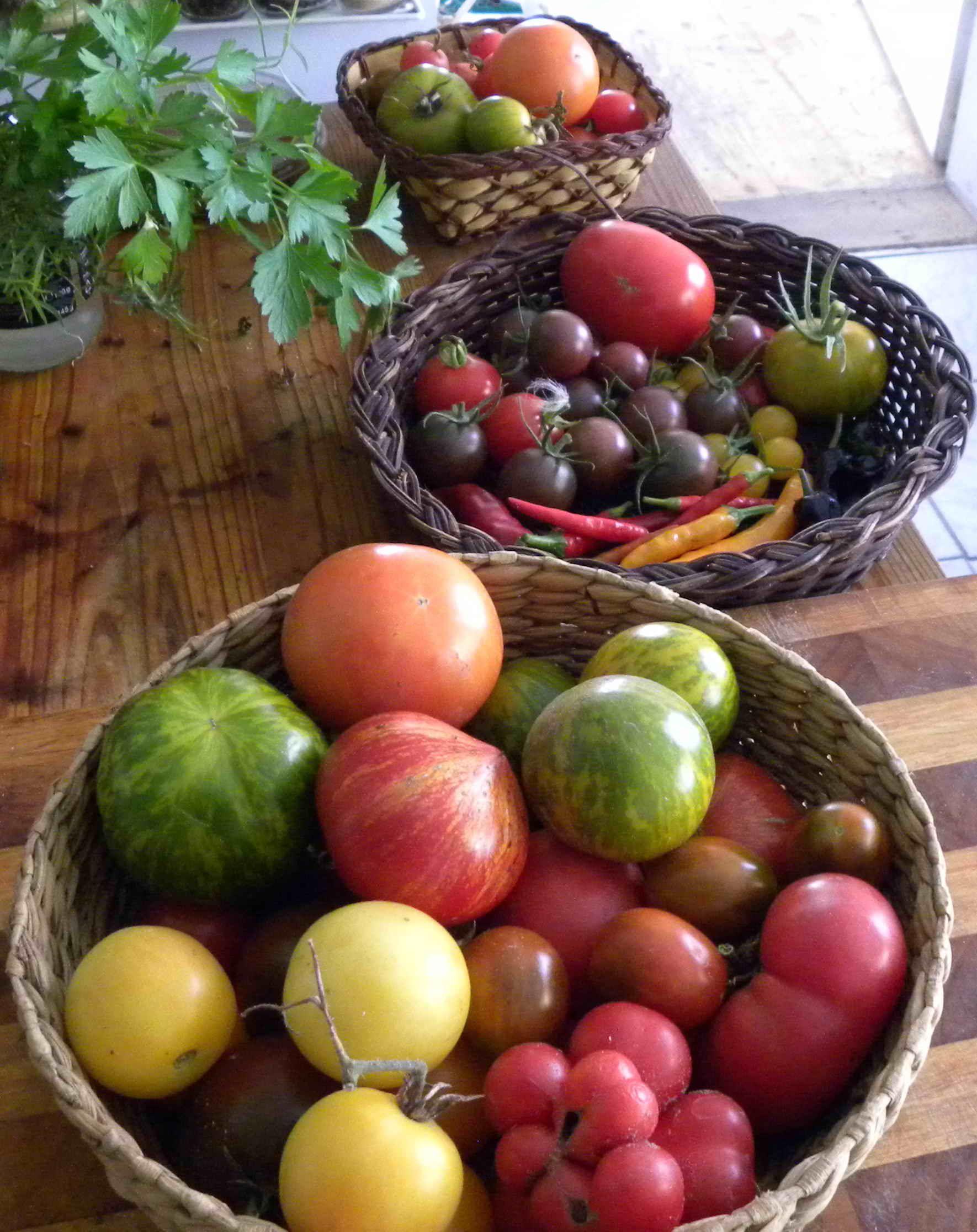 die besten 25 tomatensorten ideen auf pinterest glutenfreie vorspeisen picknick salat. Black Bedroom Furniture Sets. Home Design Ideas