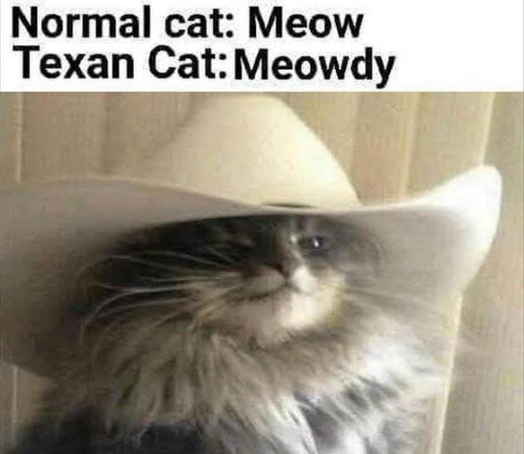 Afternoon Funny Meme Dump 37 Pics Cats Funny Cat Memes Cat Memes