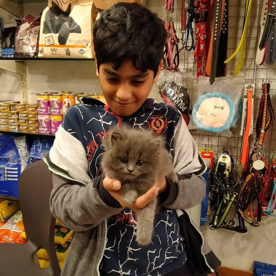 Happiness Is Getting Your New Kitten Alhamdulillah Another Persian Kitten Gone To His New Home Congratulations To In 2020 Persian Kittens Cat Accessories Cat Toys
