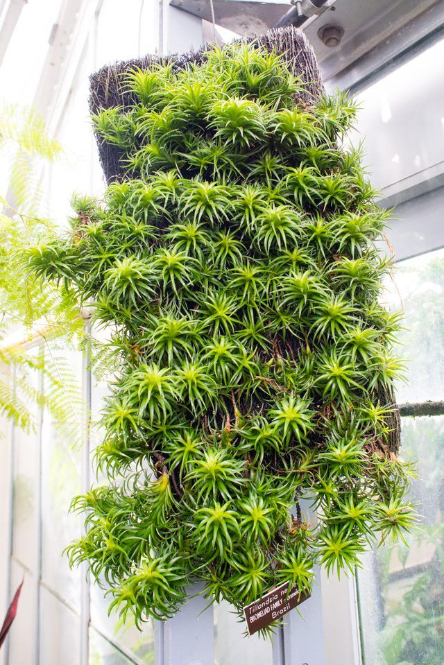 Air Plant Care 101 (With images) Air plants care, Air