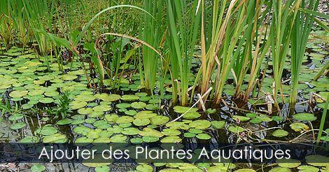 Ajouter des plantes aquatiques au jardin d 39 eau les plantes aquatiques pour bassin culture - Plante pour bassin ...
