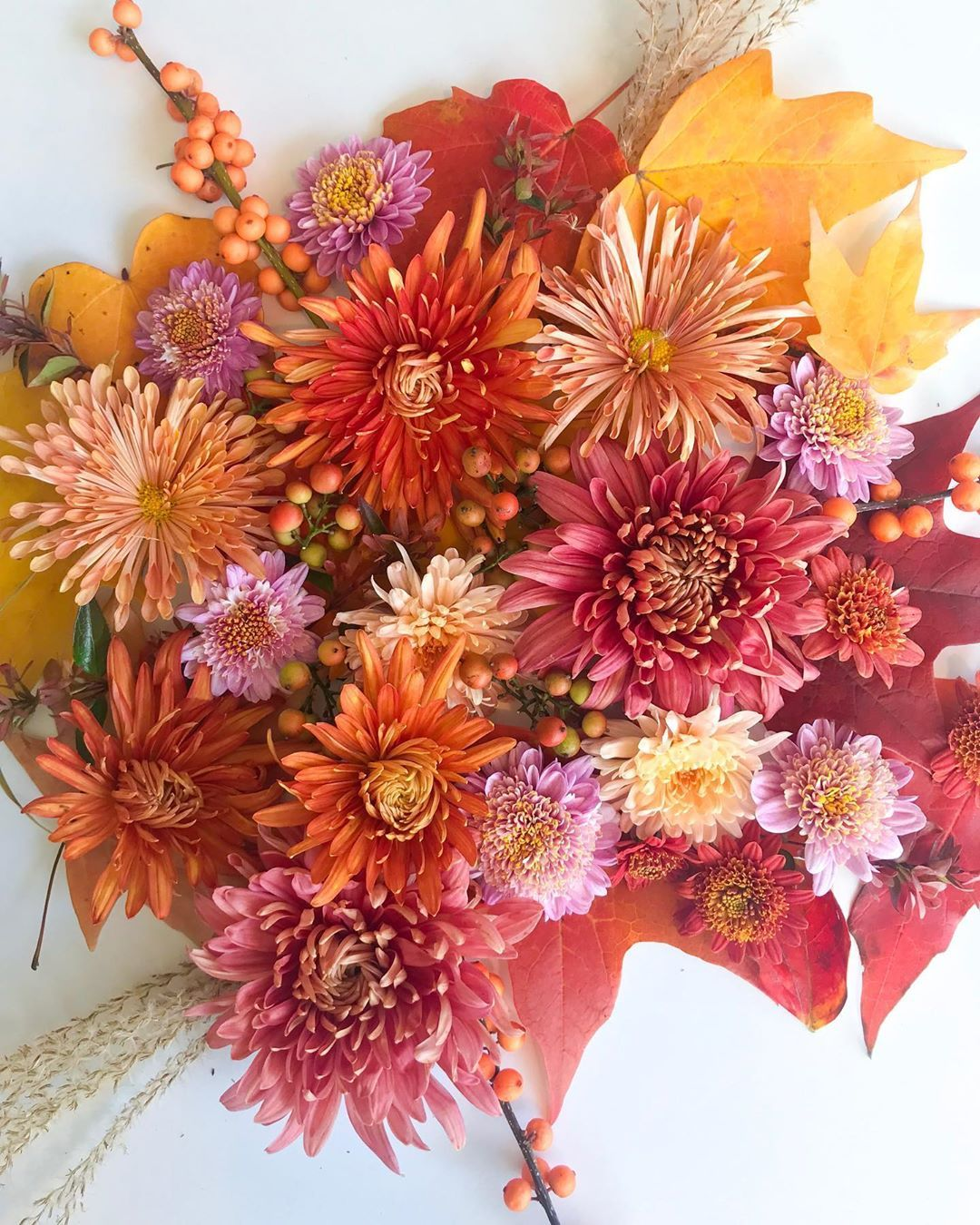 Little Acre Flowers On Instagram November Heirloommums Chrysanthemum Autumnflowers Autumncolors Autumnbouquet Fallin Fall Flowers Flowers Fall Bouquets