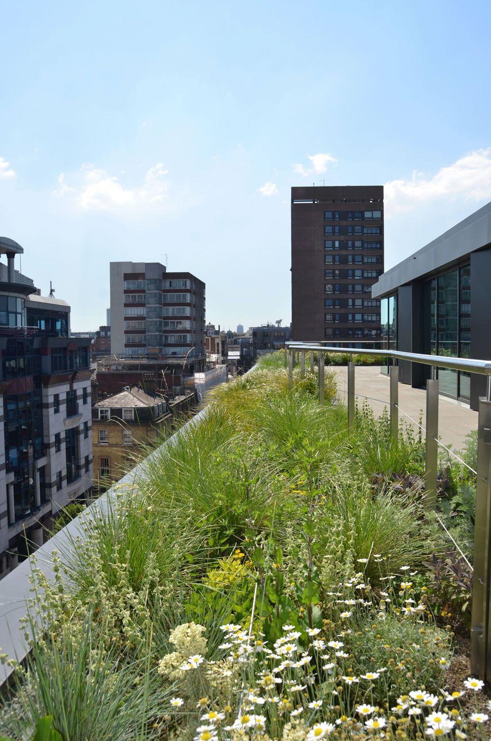 Dsc 0137 Jpg 1000 1510 Green Roof Rooftop Multi Story Building