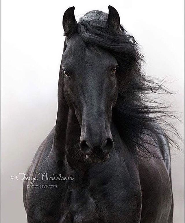 😍🐴😍Am I amazingly handsome?? Rate me from 1 to 10.😍🐴😍 . . ☑Follow me⬇️ @fanofhorses  Source 📽@unique_h0rses .
