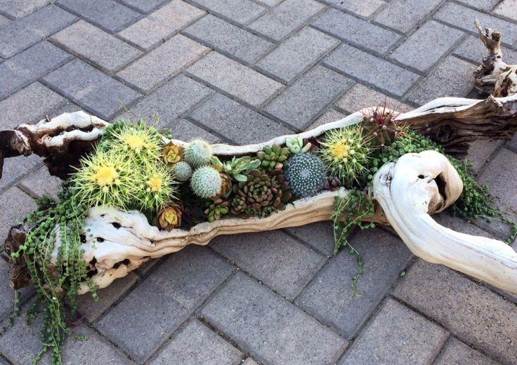 Suculentas ideas para decorar el jardín