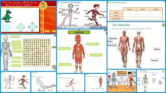 Los huesos y los músculos, actividad interactiva para enseñar las ...