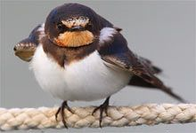 Unsere 40 häufigsten Gartenvögel kurz vorgestellt - NABU