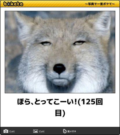 画像 : 【大喜利】ボケてに出てきた爆笑動物まとめ【bokete…