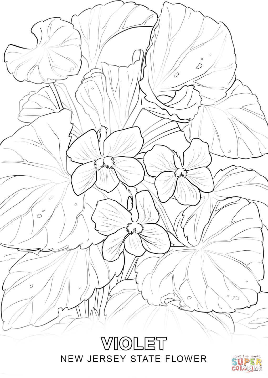 New Jersey State Flower Coloring Page Detailed Coloring