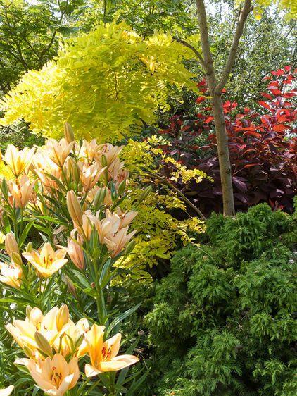 Traditional Landscape By Le Jardinet Grace Smoke Tree Purple Good Filler Zone 4 9