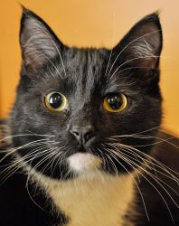 Adopt Kenny on Cute animals, Cute cats, Cats