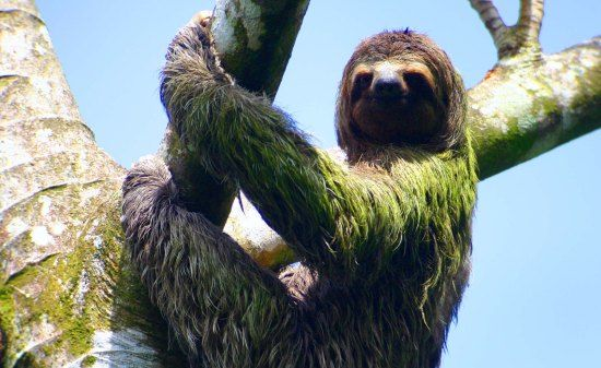 The Osa Peninsula offers a wide range of super fun activities perfect for those who want to spend their vacation breathing in fresh clean air and enjoying the great outdoors. #costarica #OsaPeninsula #tropicaldestinations #tropics #slothlove #destination #outdooractivities