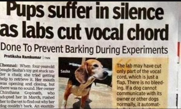 Gina C On Beagle Stop Animal Testing Stop Animal Cruelty
