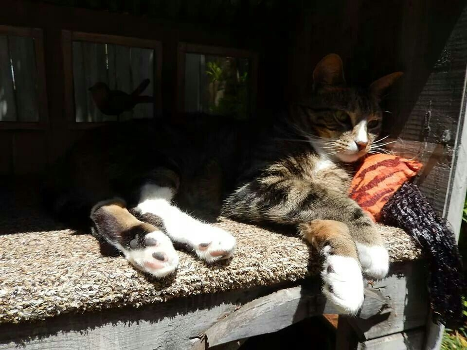 Joey the garden cat.